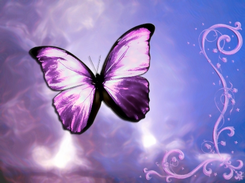 Free Butterfly Backgrounds